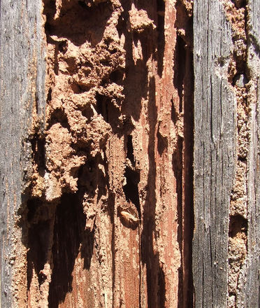 protect-your-shed-against-termites